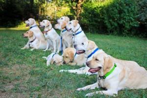 κοινωνικοποίηση σκύλου