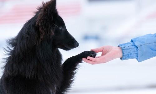 Τι είναι θετική εκπαίδευση σκύλων