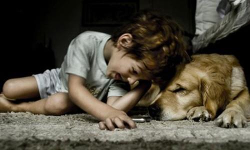 Τα οφέλη της εκπαίδευσης σκύλων