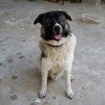 Θετικη εκπαίδευση σκύλων ελληνικός ποιμενικός