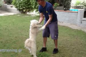 θετική εκπαίδευση σκύλων