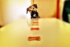 μορφές επιβράβευσης στην εκπαίδευση σκύλων