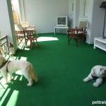 pettraining.gr θετική εκπαίδευση σκύλων o χώρος μας
