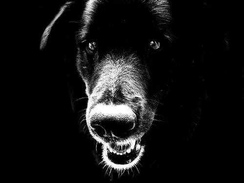 Η επιθετικότητα στους σκύλους