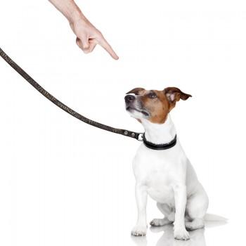 Η τιμωρία στην εκπαίδευση σκύλων