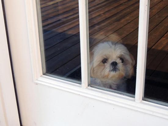 Άγχος αποχωρισμού στου σκύλους