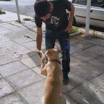 Εκπαίδευση σκύλών