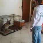 εκπαιδευση σκύλων στο σπίτι