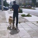 Εκπαίδευση σκύλου Μαζί